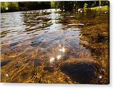 Middle Of The River Acrylic Print