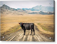 Middle Of The Road Acrylic Print