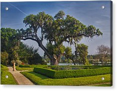 Middleton Oak Acrylic Print