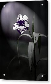 Midnight Bloom Acrylic Print