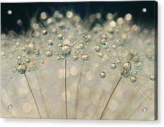 Midnight Blue Dandy Sparkle Acrylic Print