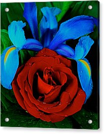 Midnight Blue Iris And A Red Rose Acrylic Print by Leslie Crotty
