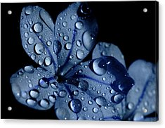 Midnight Dew Acrylic Print