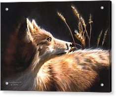 Midnight Fox Acrylic Print