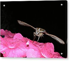 Acrylic Print featuring the photograph Midnight Hummer by Randy Rosenberger