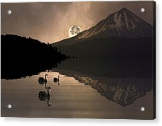 Acrylic Print featuring the photograph Midnight Moods Swan Lake In The Moonlight by Diane Schuster