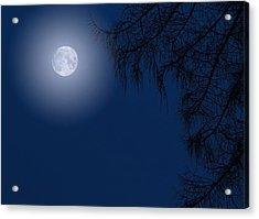 Midnight Moon And Night Tree Silhouette Acrylic Print