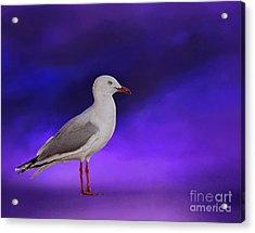 Midnight Seagull By Kaye Menner Acrylic Print by Kaye Menner