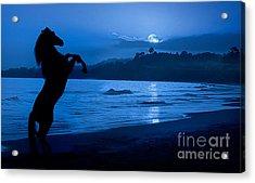 Midnight Stallion Acrylic Print by Patty Hallman