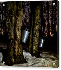 Midnight Sugar Acrylic Print