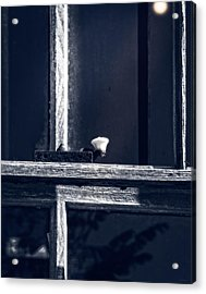 Midnight Window Acrylic Print