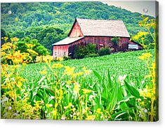 Acrylic Print featuring the photograph Midsummer  by Kendall McKernon