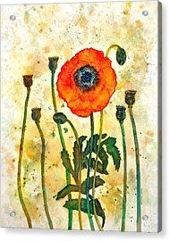 Midsummer Poppy Acrylic Print by Moon Stumpp