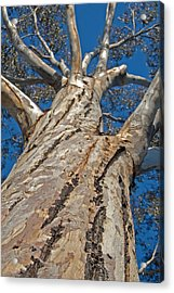 Mighty Acrylic Print by Jean Booth