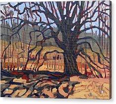 Mighty Oak Acrylic Print