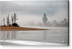 Migration At Rest Acrylic Print