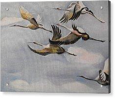Migration Frame 1 Acrylic Print