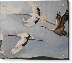 Migration Frame 2 Acrylic Print