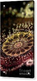 Microskopic II Acrylic Print by Sandra Hoefer