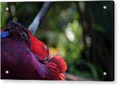 Acrylic Print featuring the photograph Miksang 4 Parrot by Theresa Tahara
