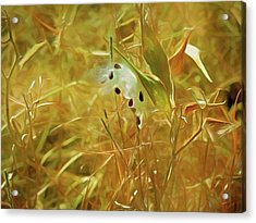 Acrylic Print featuring the mixed media Milkweed In Sunlight 2 by Lynda Lehmann