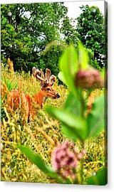 Milkweed Monster Acrylic Print
