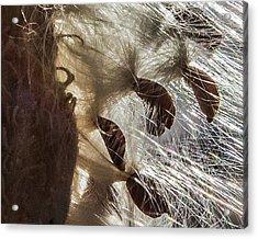 Milkweed Seed Burst Acrylic Print