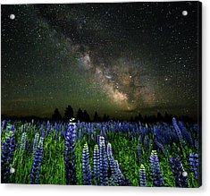 Milky Way And Lupine Acrylic Print by Cody Gould