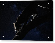 Acrylic Print featuring the photograph Milky Way Ocelot by Wade Aiken