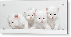 Milky Collection Acrylic Print