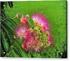 Mimosa II Acrylic Print by James Granberry