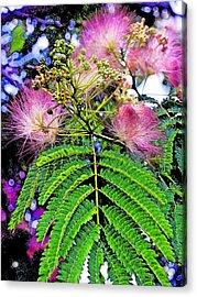 Mimosa One Acrylic Print