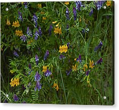 Mimulus And Vetch Acrylic Print by Doug Herr