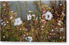 Mingling Flowers Acrylic Print by Jean Booth