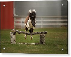 Mini Jumper Acrylic Print by Debby Herold