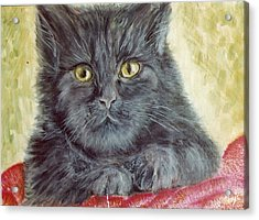 Black Cat Acrylic Print by Remy Francis