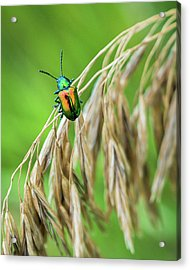 Acrylic Print featuring the photograph Mini Metallic Magnificence  by Bill Pevlor