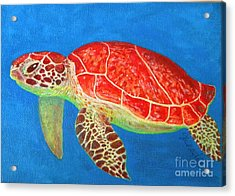 Mini Turtle Acrylic Print