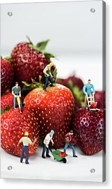 Miniature Construction Workers On Strawberries Acrylic Print