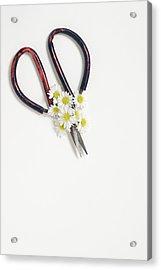 Miniature Daisies And Vintage Scissors Acrylic Print