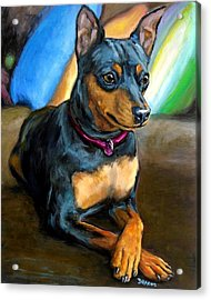 Miniature Pinscher Formal Acrylic Print by Dottie Dracos