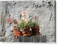 Acrylic Print featuring the photograph Miniature Plants For Sale by Shirin Shahram Badie