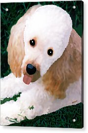 Acrylic Print featuring the photograph Miniature Poodle Albie by Marian Cates