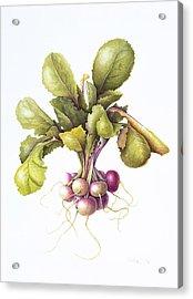Miniature Turnips Acrylic Print by Margaret Ann Eden