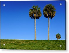 Minimal Palm Trees On A Hill In Saint Augustine Florida Acrylic Print