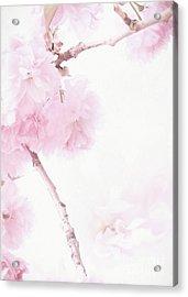 Minimalist Cherry Blossoms Acrylic Print