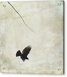 Acrylic Print featuring the photograph Minimalistic Bird In Flight  by Aimelle