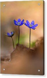 Acrylic Print featuring the photograph Minimalistic Impresion With Liverworts by Jaroslaw Blaminsky