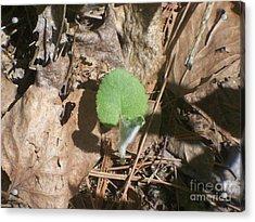 Minnesota New Plant Life Acrylic Print by Sacred  Muse