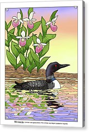 Minnesota State Bird Loon And Flower Ladyslipper Acrylic Print